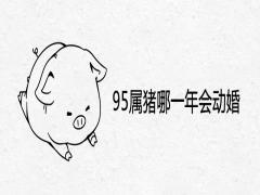 95属猪哪一年会动婚