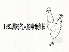 1981属鸡的人的寿命多长一生健康运势如何