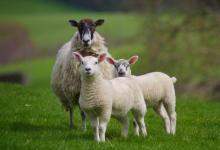 属羊人几点出生的最好?