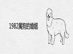 1982属狗的婚姻