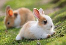 属兔的性格如何?