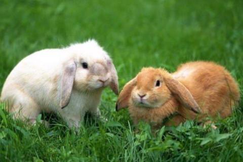 1999年属兔人2022年运势及运程 23岁属兔人每月运势解析