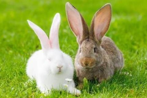 1975年属兔人2022年运势及运程 47岁属兔人每月运势解析