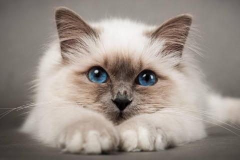 梦到猫咪是什么意思?