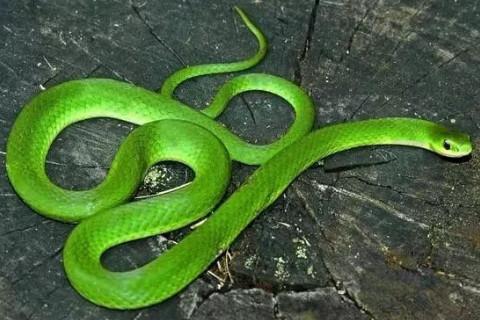 1965年属蛇人2022年运势及运程 57岁属蛇人每月运势解析