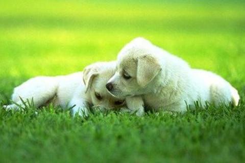 梦见狗死了是什么预示?