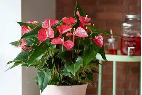 家里摆放什么植物财运好?