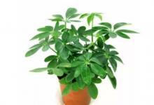 十二生肖适合种植什么植物?