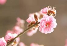 桃花纹的人桃花多?
