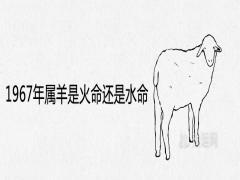 1967年属羊是火命还是水命