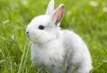 1987年属兔人2022年运势及运程 35岁属兔人每月运势解析