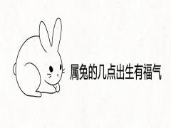 属兔的几点出生有福气