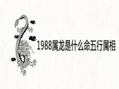 1988属龙是什么命五行属相