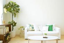 客厅植物摆放的方位风水