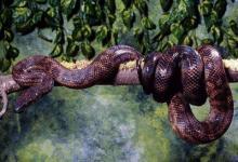 做梦梦到大蟒蛇