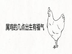 属鸡的几点出生有福气