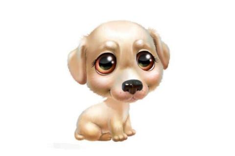 生肖属狗的一生命运如何?