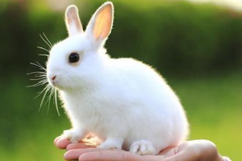 生肖属兔的一生命运如何?