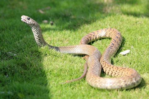 属蛇的男人命运如何?