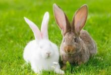 1951年属兔人2022年运势及运程 71岁属兔人每月运势解析
