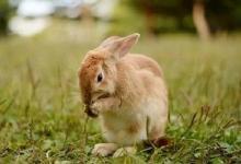 属兔人买房风水禁忌