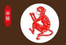 生肖属猴的一生命运如何?