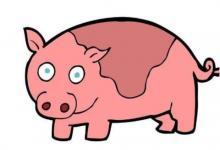 属猪跟属鸡人恋爱好不好?