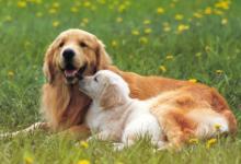 属狗人和属狗人结婚好不好?