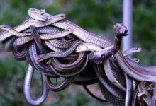 做梦梦见到处都是蛇