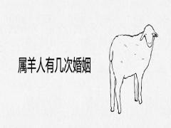 属羊人有几次婚姻