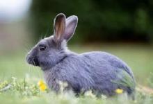 1963年属兔人2022年运势及运程 59岁属兔人每月运势解析