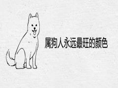 属狗人永远最旺的颜色
