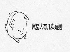 属猪人有几次婚姻