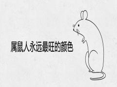 属鼠人永远最旺的颜色