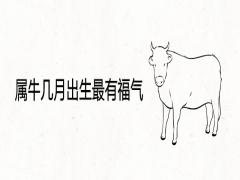 属牛几月出生最有福气