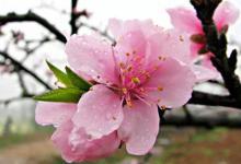 影响桃花运的风水