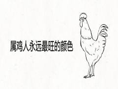 属鸡人永远最旺的颜色