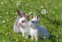 属兔女孩子出生最佳时辰
