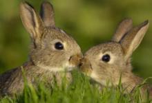 2011年属兔人2022年运势及运程 11岁属兔人每月运势解析