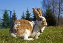 属兔人上等命的时辰有哪些?