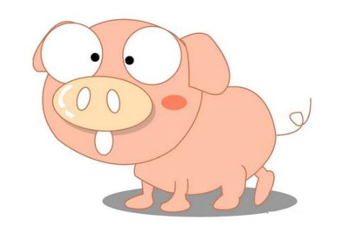 属猪和十二生肖婚姻配对分析