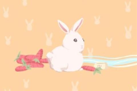 生肖兔的财运怎么样?