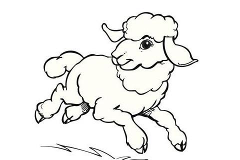 属羊人办公桌摆放风水植物