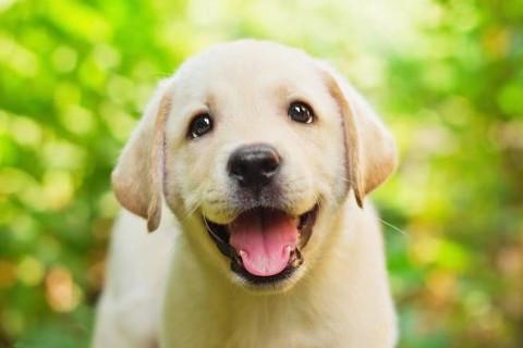 2018年生肖狗的贵人生肖有哪些?