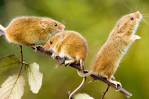 属鼠如何取衣食无忧的名字