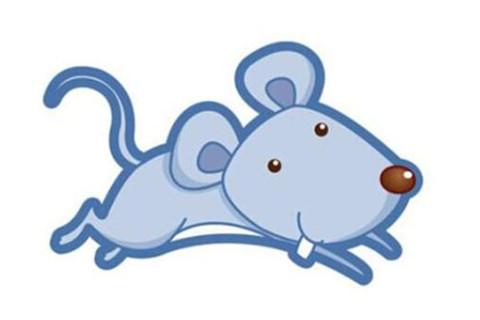 生肖鼠和楼层的风水关系
