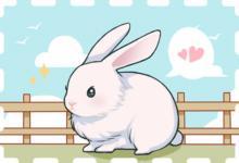 生肖兔一生的感情如何?
