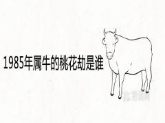 1985年属牛的桃花劫是谁
