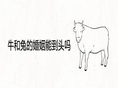 牛和兔的婚姻能到头吗