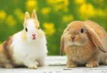 属兔的最佳配偶是哪些?